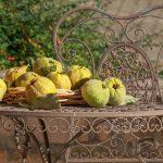 gelee de coing recette grand mere